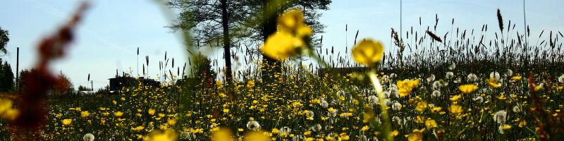 meadow-5